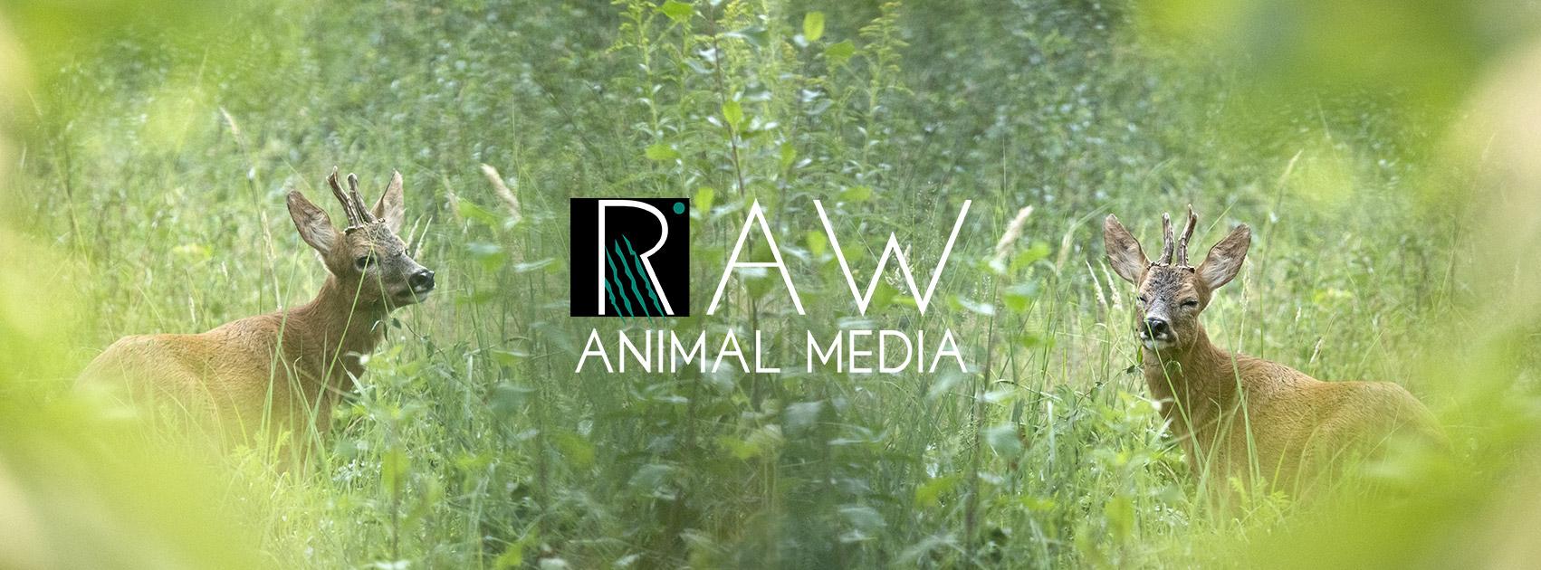 Raw Animal Media